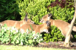 Three cubs in the bushes