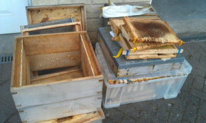 Two dead hives